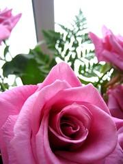 Roses again