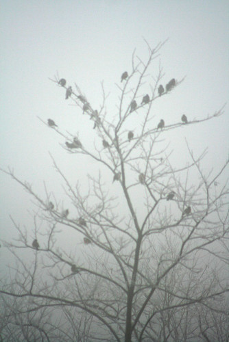 crowsInTree