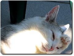 Cat with headache