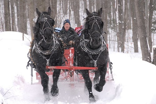 Photo Friday: Sleigh Ride by jsorbieus