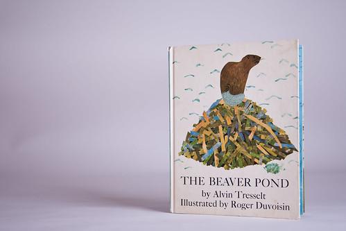 The Beaver Pond
