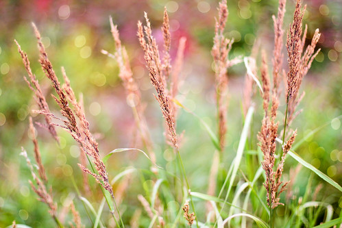 grass wirth tiny bokeh (by Leaca's Philosophy)