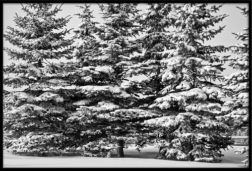 snowy trees at church