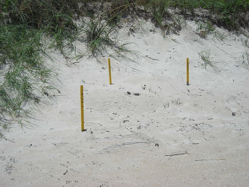 Turtle markers on a beachline