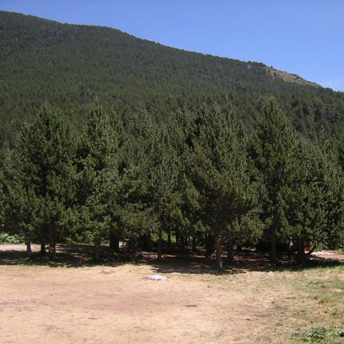 Bosc de Brocelaina