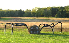 Cool hay spider