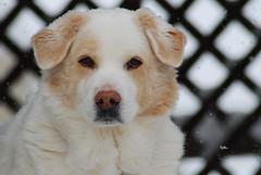 Maggie Dog