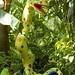 Botanical Gardens and Zoo 040