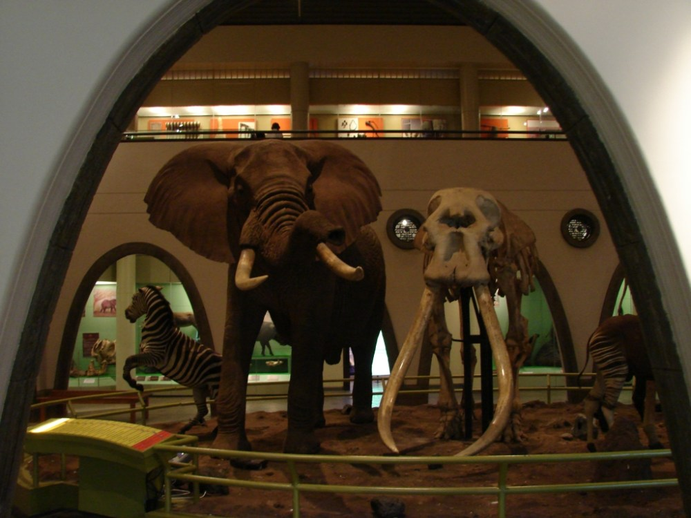 Nairobi National Museum (2/6)