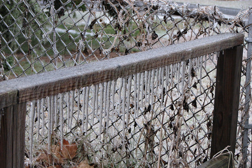 Icicles on our fence
