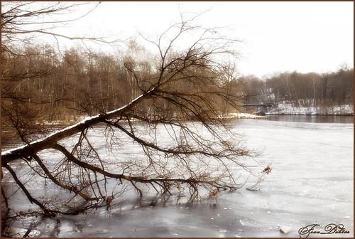 Leblos im Eis gefangen