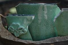 ceramics-123