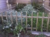 Thystle: Urban Front Yard Gardens