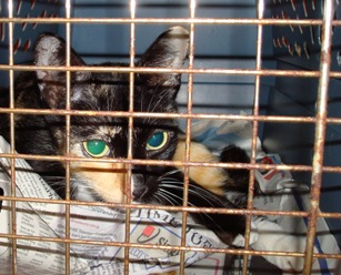 Becky_in_carrier_20080305_07x