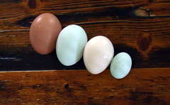 Egg Egg Egg Egg