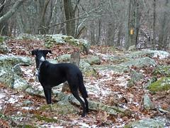 Bear Cliffs- Jimmie Looks at Trail