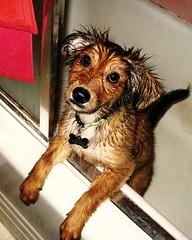 Gus Takes a Bath