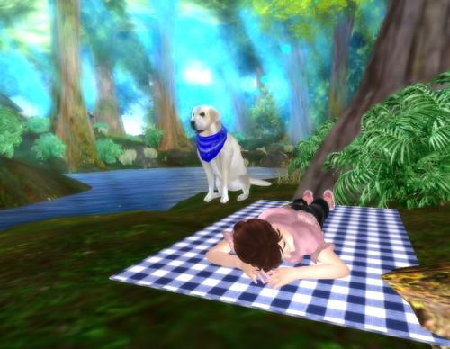 yellowlab picnic