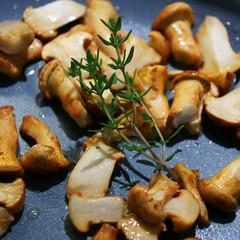 Gemüseterrinne einfach Pilzchen braten