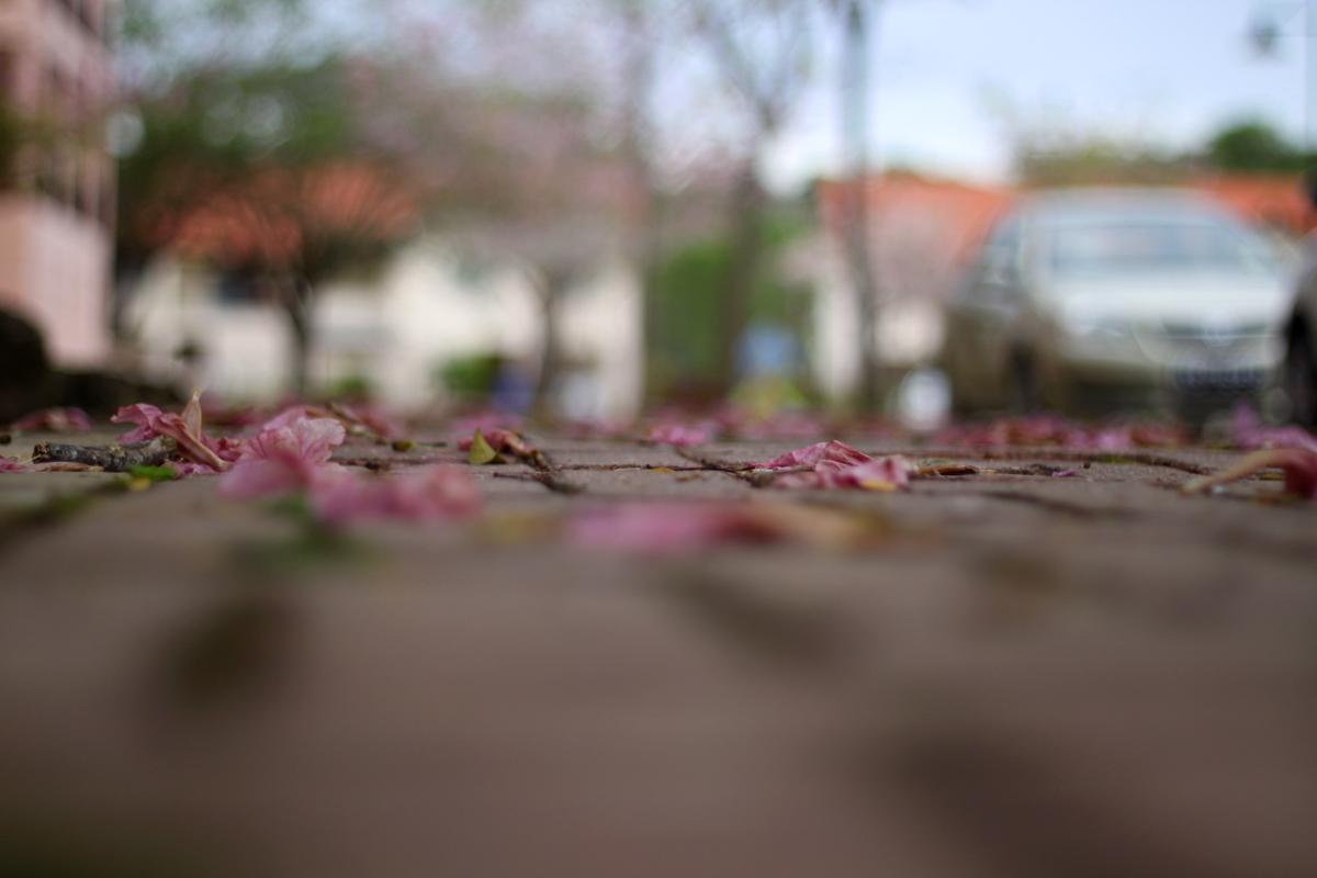 dead spring 1