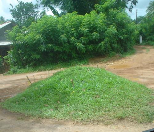 Final Turn off  to Bevis Bawa's Brief Garden