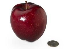 15-apple