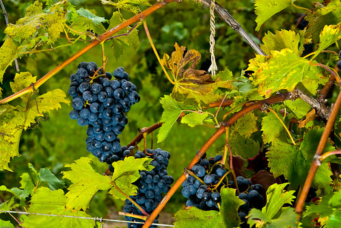 Fenn Valley Winery-5
