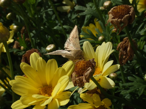 Moth & flower