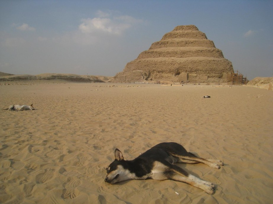 As the sun sets, dogs sleep amidst the oldest pyramids in Egypt