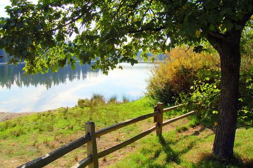 Cottage Lake Park