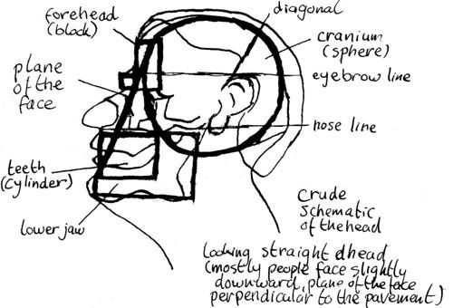 Skull, part 2