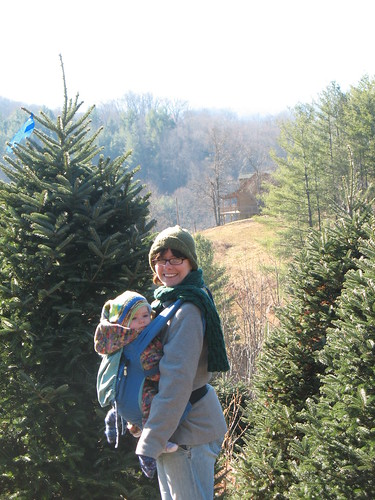 Christmas tree farm in Boone