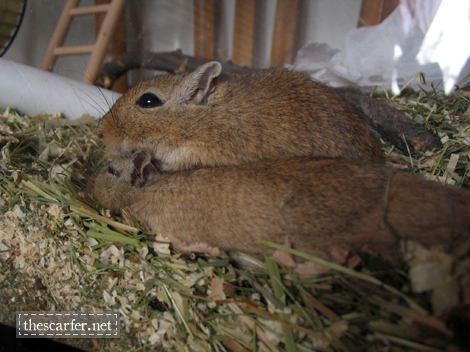 Snoozing on some hay...