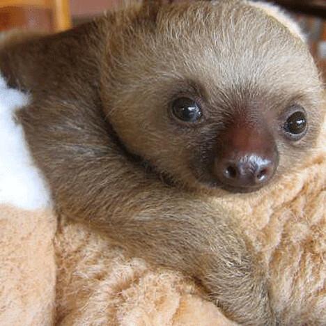 sloth_5sfw