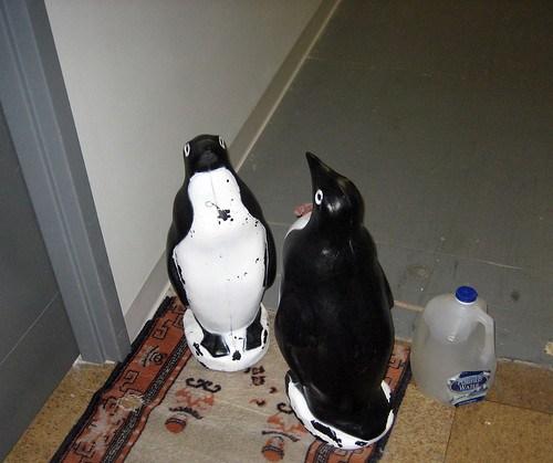Penguins at Vine Arts Center