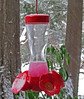 frozen hummingbird feeder fluid 6337.jpg