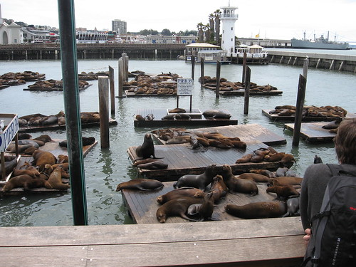 Seals at Fisherman's Wharf
