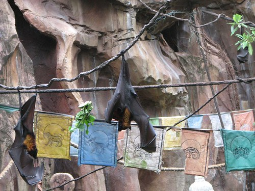 Bats at Disney's Animal Kingdom