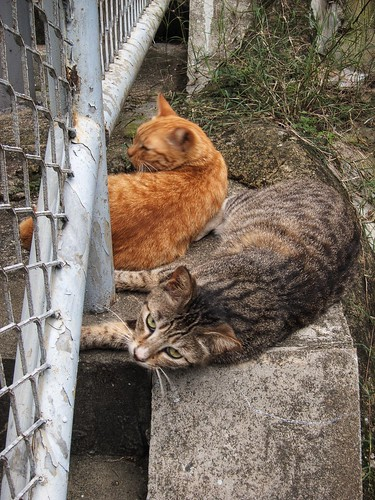 Cats below the fence