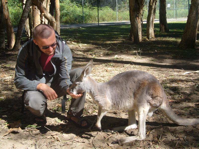 R Koalas Dangerous Leave a Reply Cancel r...