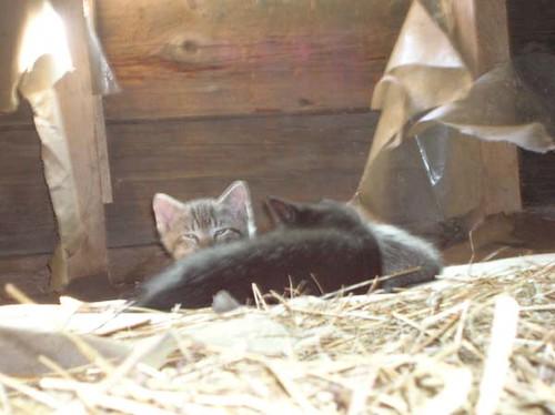 Kittens in the loft