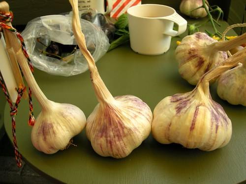 garlic1642