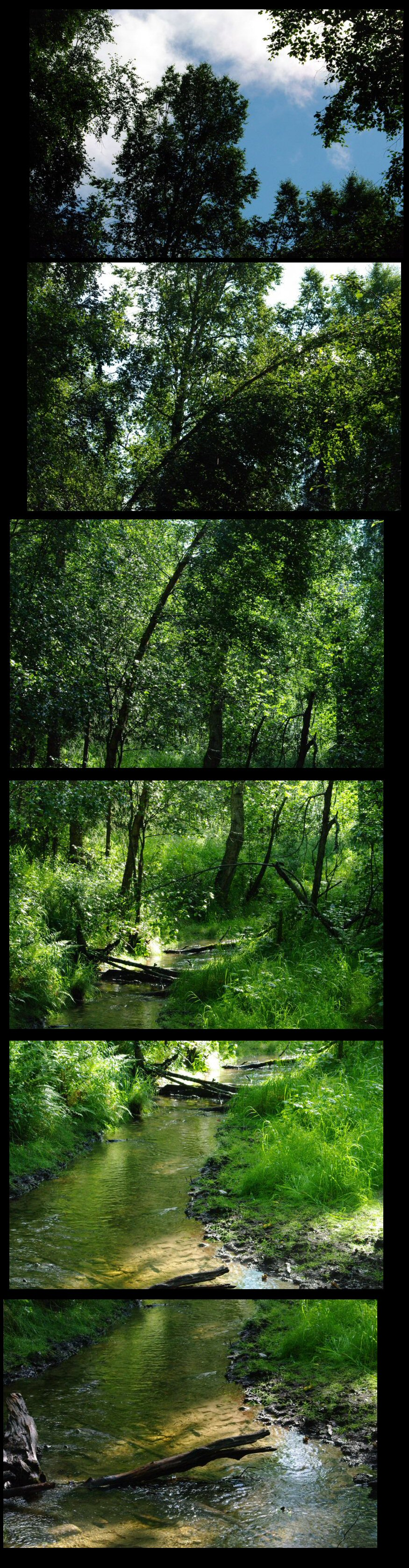 Forest Scene, look at this full size