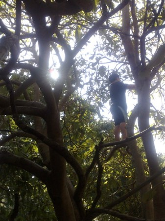 My son climbing a tree at Peninsula