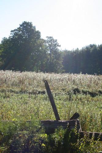 Field in morning
