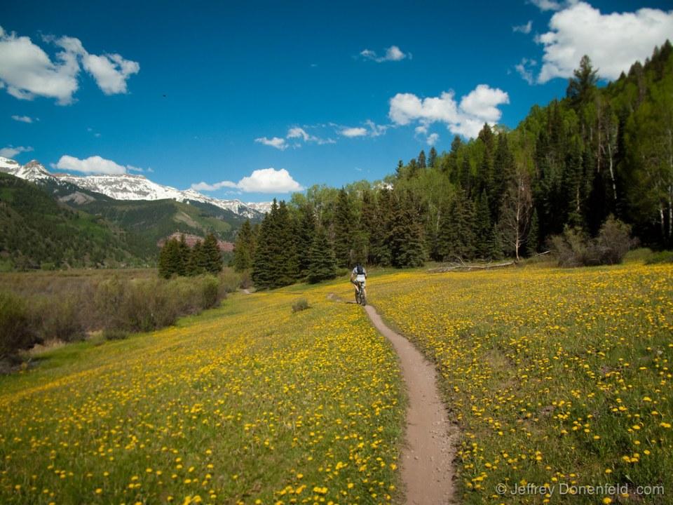 Biking through flowers on the valley floor...