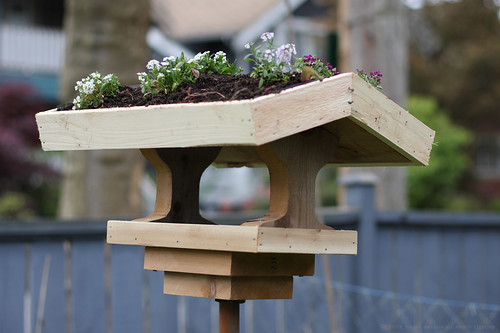 Green roof birdfeeder