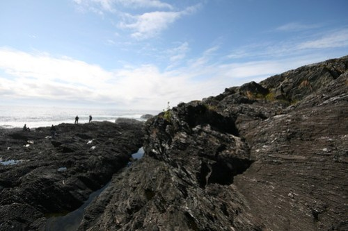 Jagged Coastline around Botany Bay