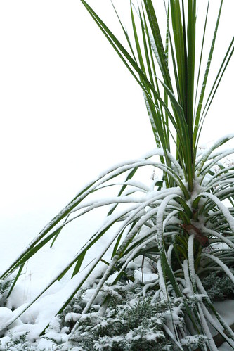 Tropical plants look odd in the snow