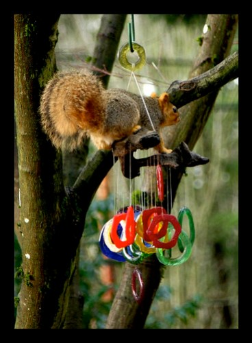 My glass windchimes being rung by a squirrel